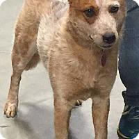 Adopt A Pet :: Ariel - Texico, IL