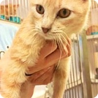 Adopt A Pet :: Rossen - Fort Smith, AR