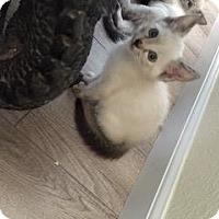 Adopt A Pet :: *LUCI - Sacramento, CA