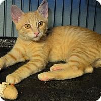 Adopt A Pet :: Tuff - Tomball, TX