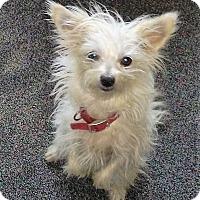 Adopt A Pet :: Camille - Oakley, CA