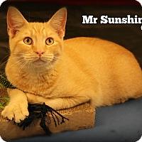 Adopt A Pet :: Mr. Sunshine - Glen Mills, PA
