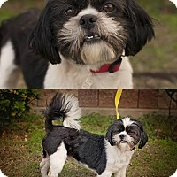 Adopt A Pet :: Bandit - Ponca City, OK