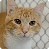 Adopt A Pet :: Teddy - Greenwood, SC