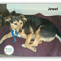 Adopt A Pet :: Jewel - Plainfield, IL