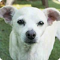 Adopt A Pet :: Mary - Agoura, CA