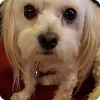 Adopt A Pet :: JACK - Rancho Cucamonga, CA