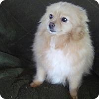 Adopt A Pet :: Nina - Temecula, CA