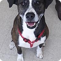 Adopt A Pet :: KEISHA - Franklin, NC