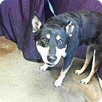 Adopt A Pet :: Braden URGENT - San Diego, CA