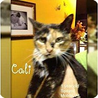 Adopt A Pet :: Cali - Mobile, AL