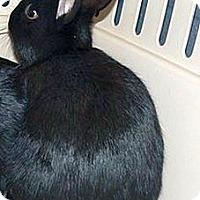 Adopt A Pet :: Juneau - Green Bay, WI