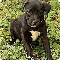 Adopt A Pet :: Cait - Staunton, VA