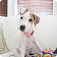 Adopt A Pet :: Baby Lilly  9 lbs - Marlton, NJ