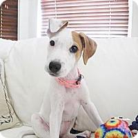 Adopt A Pet :: Baby Lilly  9 lbs - Marlton, NJ