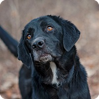 Adopt A Pet :: Dusty - Lewisville, IN