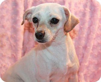 Chihuahua Mix Dog for adoption in Phelan, California - Heaven