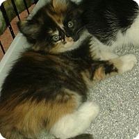 Adopt A Pet :: Alexis - Whittier, CA