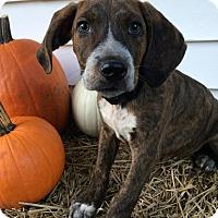 Adopt A Pet :: Black Boy - Zanesville, OH