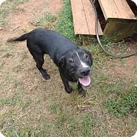 Adopt A Pet :: Stripe - Middletown, RI