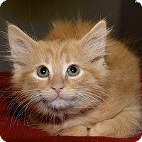 Adopt A Pet :: Jocelyn - Medina, OH