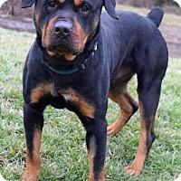 Adopt A Pet :: Mystro D-68538 - Westampton, NJ