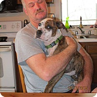Adopt A Pet :: Lily - Sanford, NC