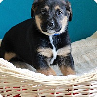 Adopt A Pet :: Curly - Waldorf, MD