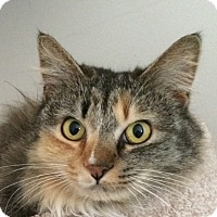 Adopt A Pet :: Lady - Winchester, CA