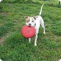 Adopt A Pet :: Fiona - Sanford, NC