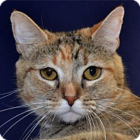 Adopt A Pet :: Pumpkin - Lenexa, KS