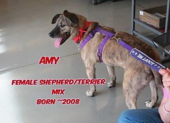 Bull Terrier Mix Dog for adoption in Huddleston, Virginia - Amy