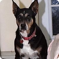 Adopt A Pet :: Koby - Miami, FL