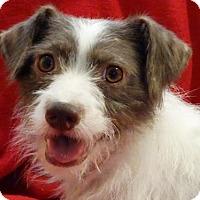 Adopt A Pet :: Andy - Vacaville, CA