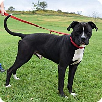 Adopt A Pet :: Bandy - Lisbon, OH