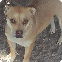 Adopt A Pet :: Carmen - Las Vegas, NV