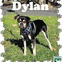 Adopt A Pet :: Dylan - Fallston, MD