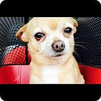 Adopt A Pet :: Marshall - Longview, TX