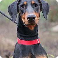 Adopt A Pet :: Chasky - Fillmore, CA