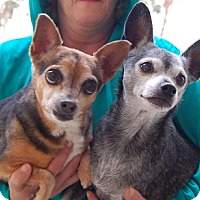 Adopt A Pet :: Babe - Las Vegas, NV