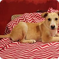 Adopt A Pet :: Roquefort - Los Angeles, CA
