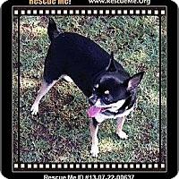 Adopt A Pet :: Oreo - Gilbert, AZ