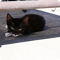 Adopt A Pet :: Simon - Barnegat, NJ