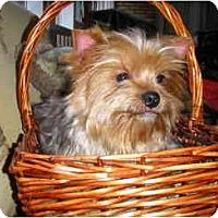 Adopt A Pet :: McKenzie - Mooy, AL