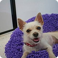 Adopt A Pet :: FINLEY - Mission Viejo, CA