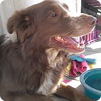 Adopt A Pet :: Stevie - Sneads Ferry, NC