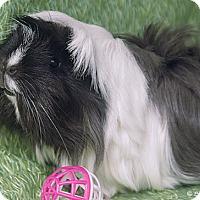 Adopt A Pet :: Lulu - Santa Barbara, CA