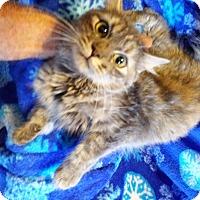 Adopt A Pet :: June - Delmont, PA