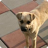 Adopt A Pet :: Buster - Salamanca, NY
