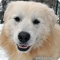 Adopt A Pet :: Denver - new! - Beacon, NY